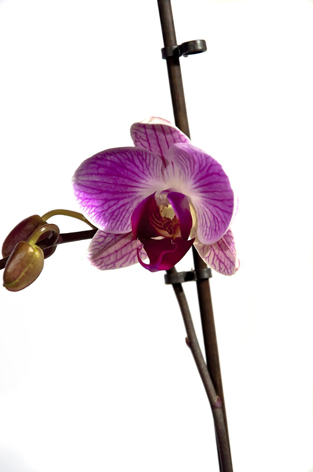 Орхидея_DSC_1619_1
