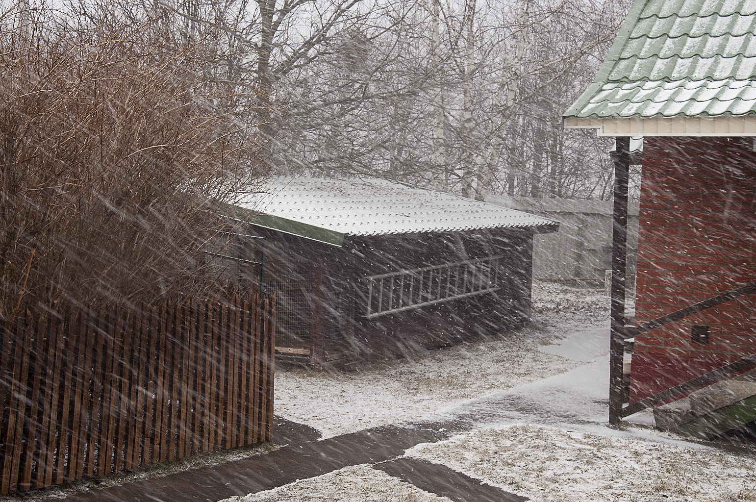 Снег_DSC_1962