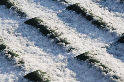 Снег_DSC_1966