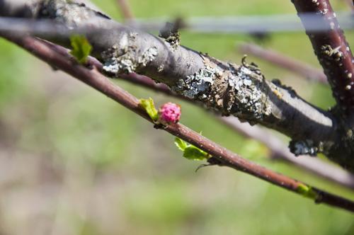 Весна_DSC_2304