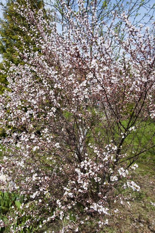 Весна_DSC_2307