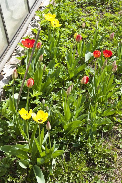 Весна_DSC_2308