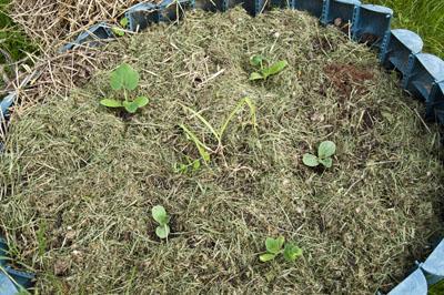 Сад и огород_DSC_2799