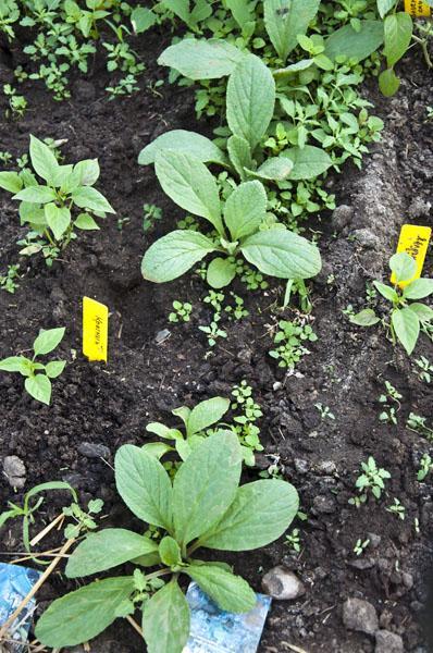 Сад и огород_DSC_2852