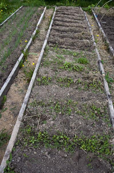 Сад и огород_DSC_2869