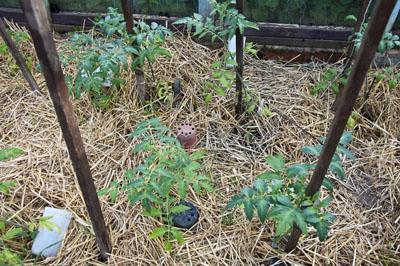 Сад и огород_DSC_2904