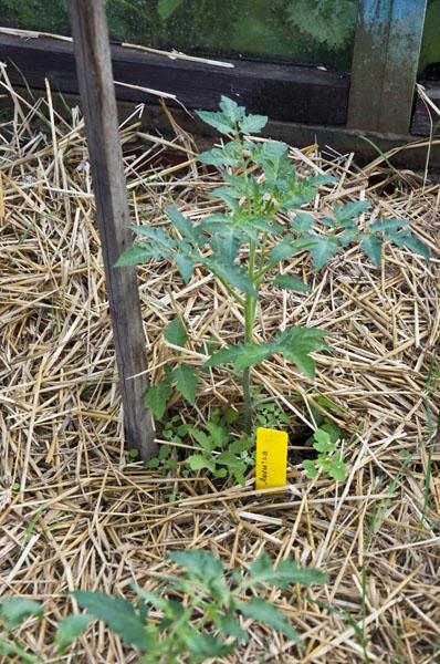 Сад и огород_DSC_2911