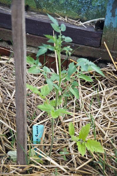 Сад и огород_DSC_2914