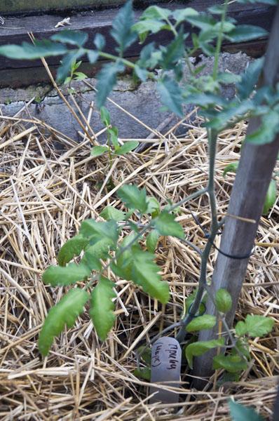 Сад и огород_DSC_2934