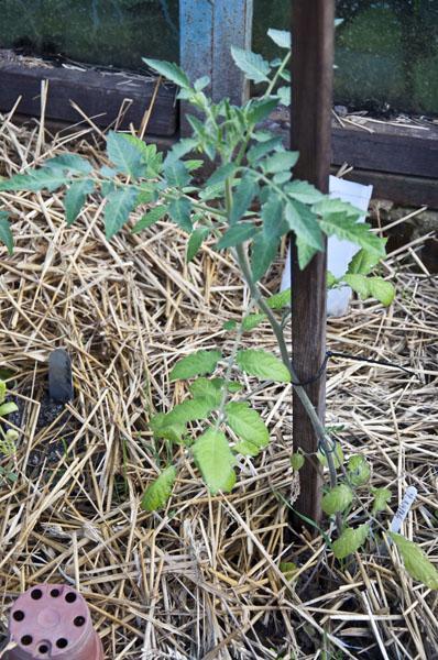 Сад и огород_DSC_2940