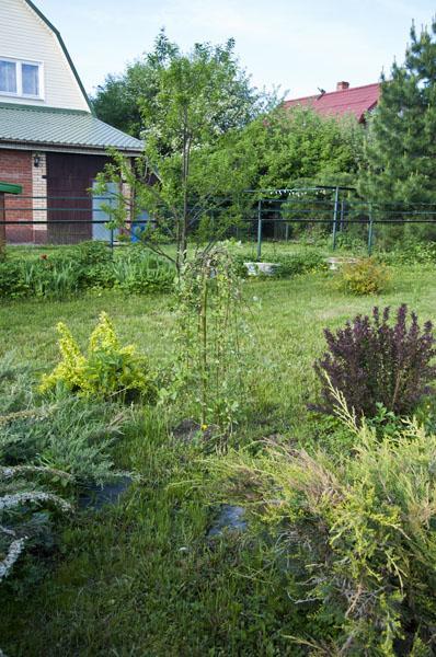Сад и огород_DSC_2968