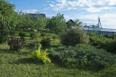Сад и огород_DSC_2973