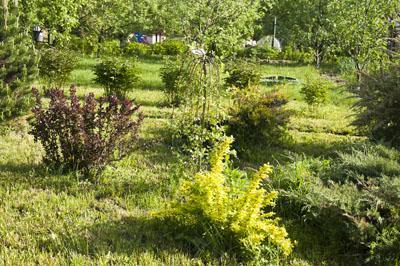 Сад и огород_DSC_2974