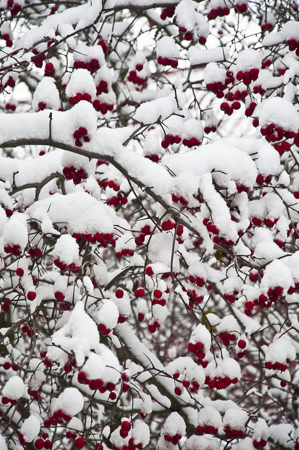Зима_DSC_4920_1