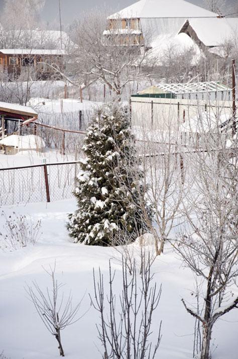 Зима_DSC_5582