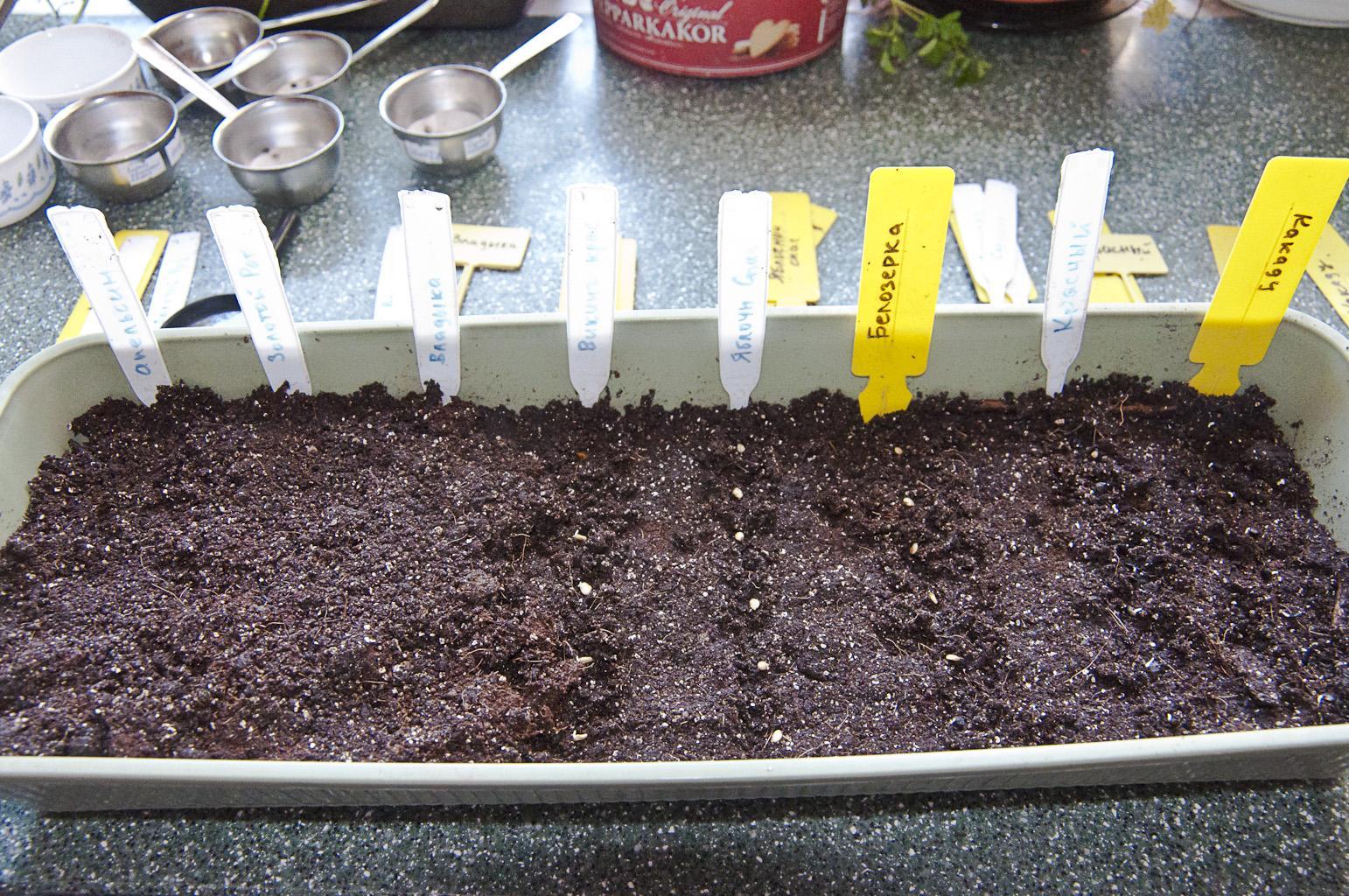 Семена для рассады фото