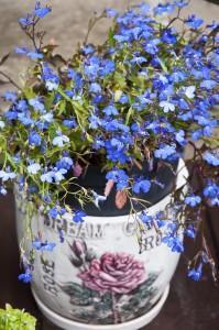Цветы_DSC_3936