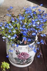 Цветы_DSC_3937