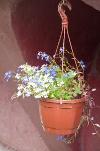 Цветы_DSC_3939