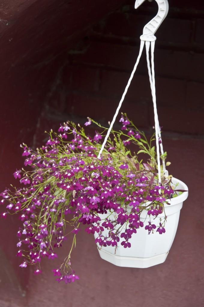 Цветы_DSC_3941