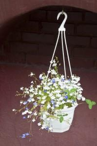 Цветы_DSC_3943