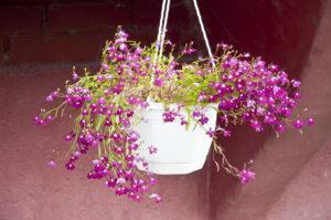 Цветы_DSC_3944