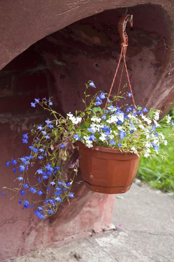 Цветы_DSC_3945