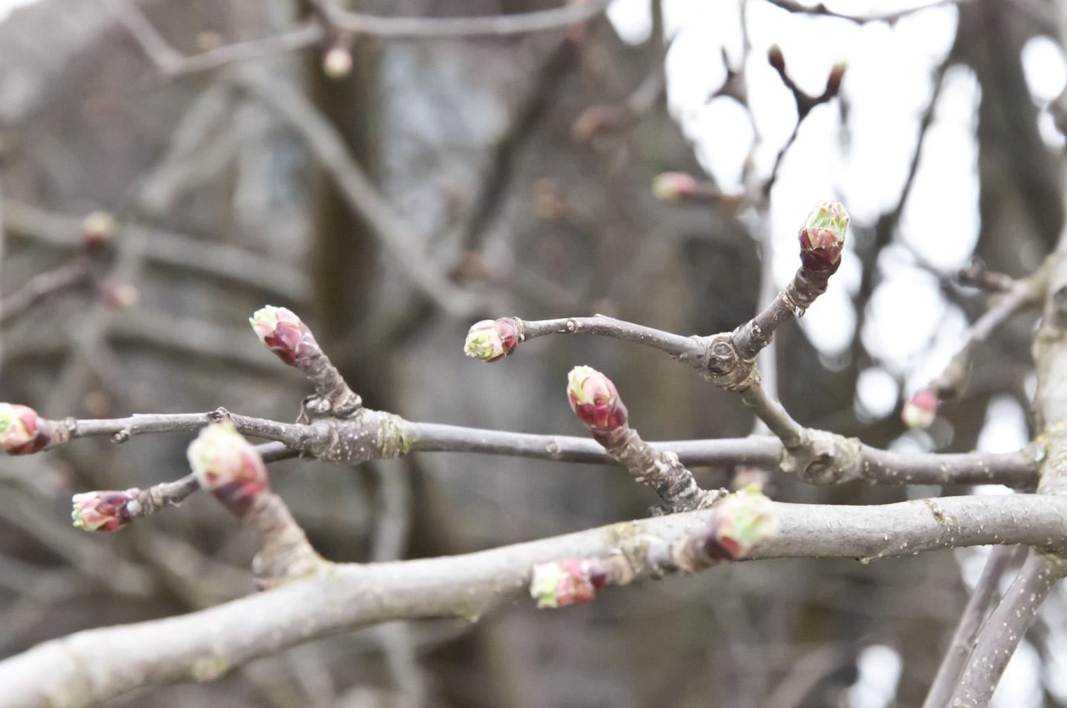 Весна_DSC_6347