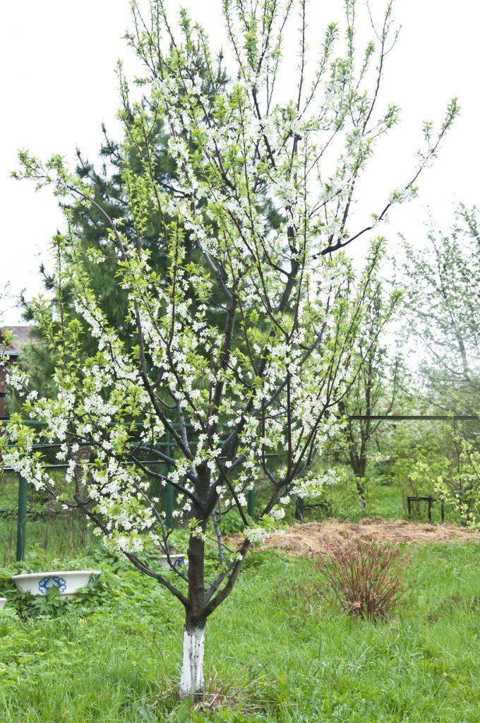 Цветущий сад_DSC_6614