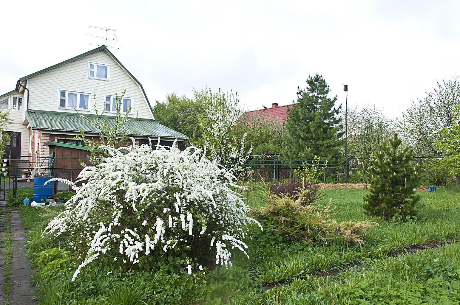 Цветущий сад_DSC_6779