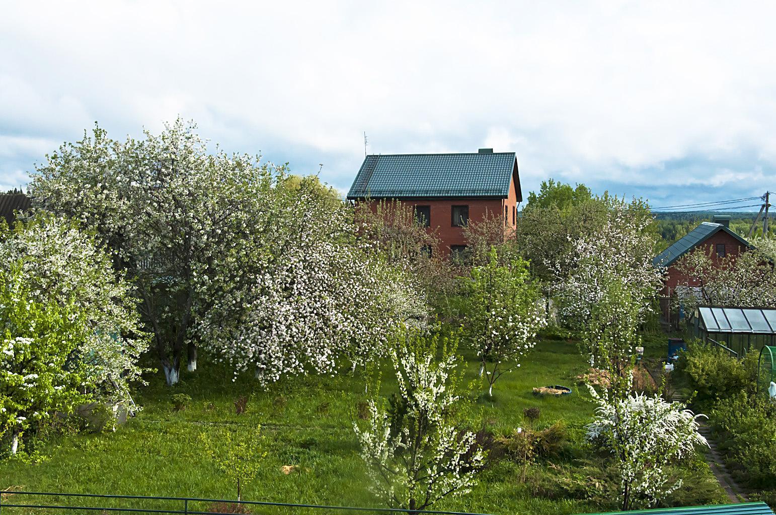 Цветущий сад_DSC_6789