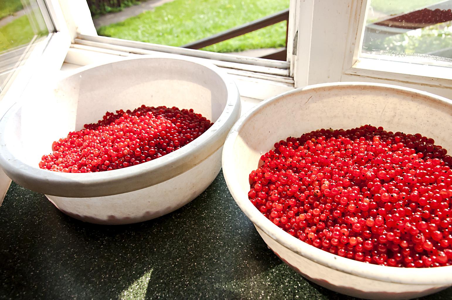 Желе из красной смородины на зиму: пошаговая инструкция