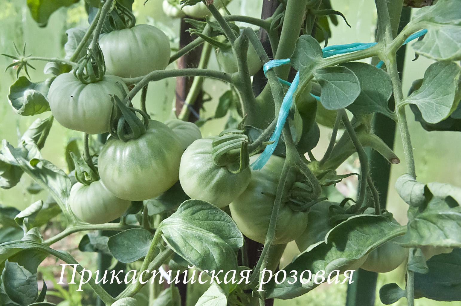 Огород_1_DSC_8652