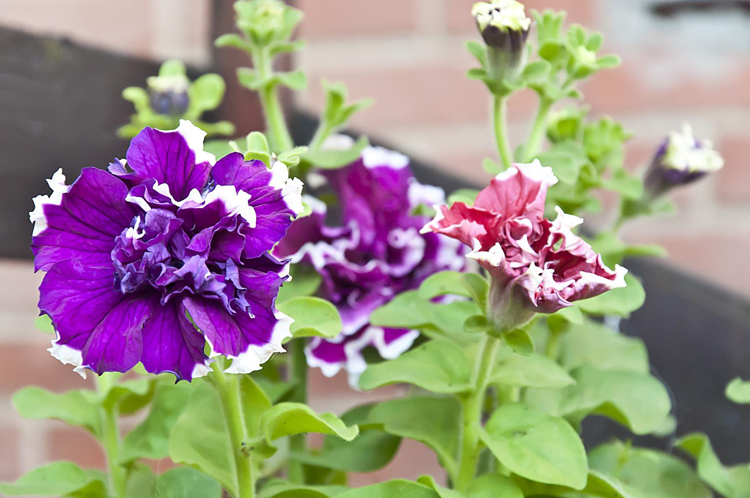 Цветы_DSC_0371