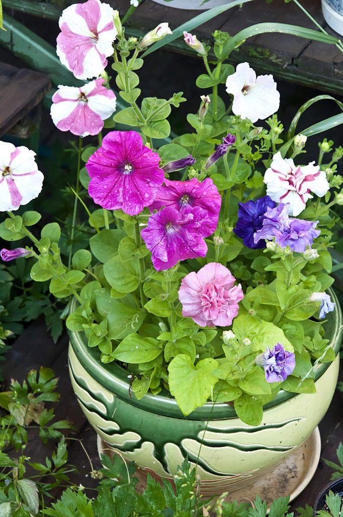 Цветы_DSC_0373