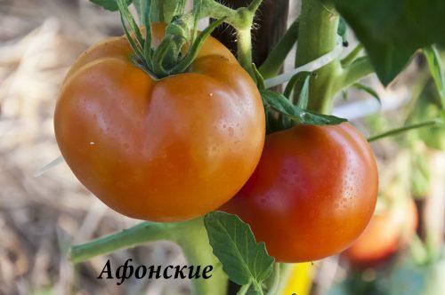 Афонские_DSC_1189
