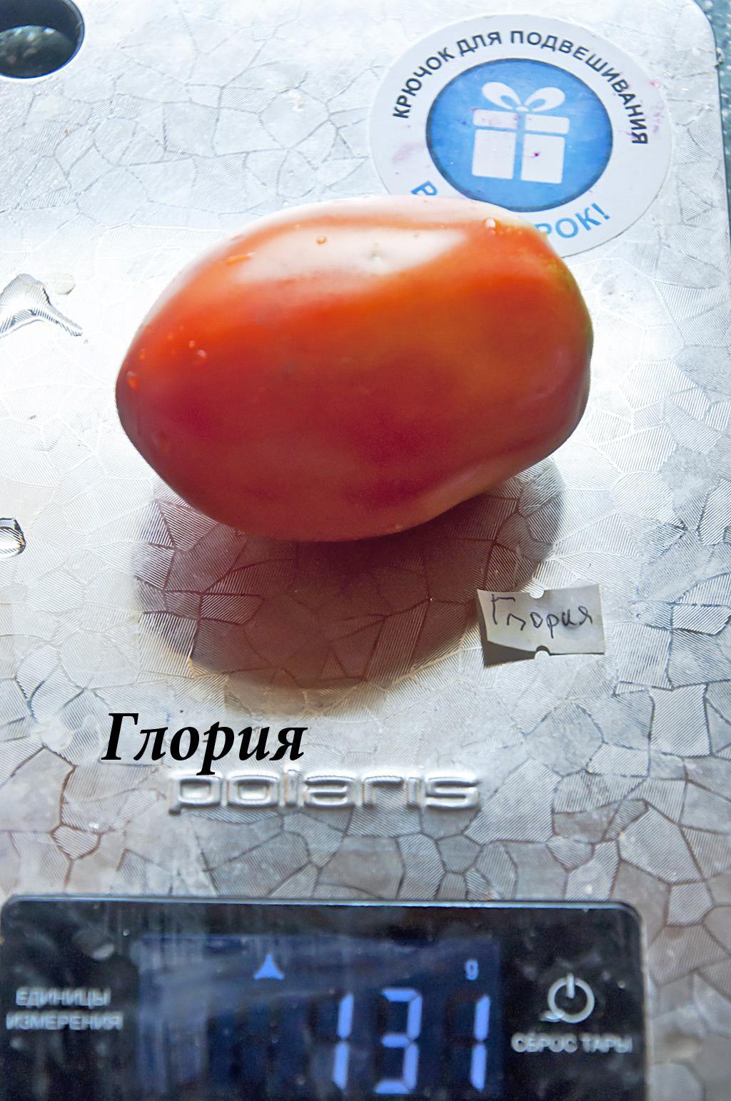 Глория_DSC_9376