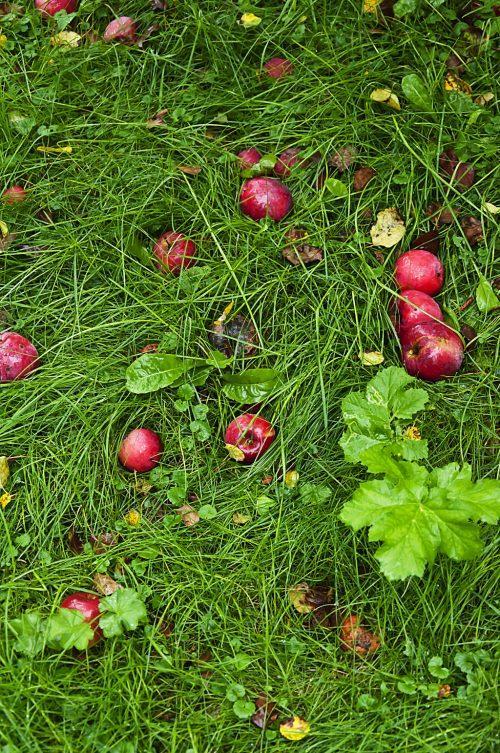 Тыквы и яблони_DSC_9996