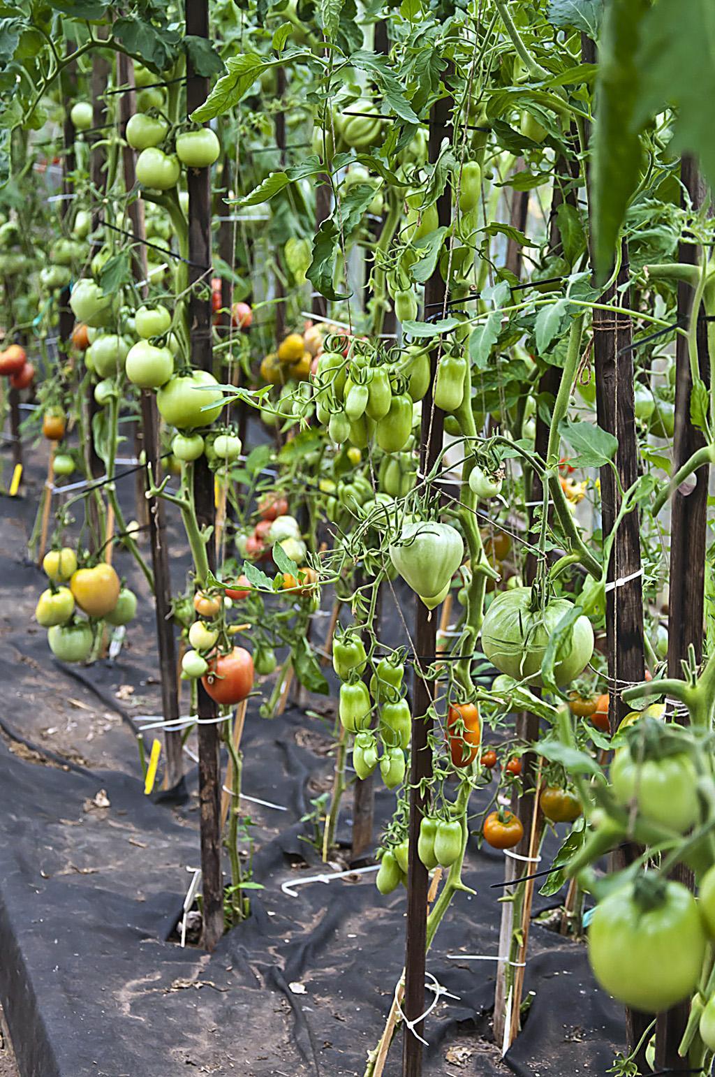 Впер бабе по самые помидоры фото 412-31