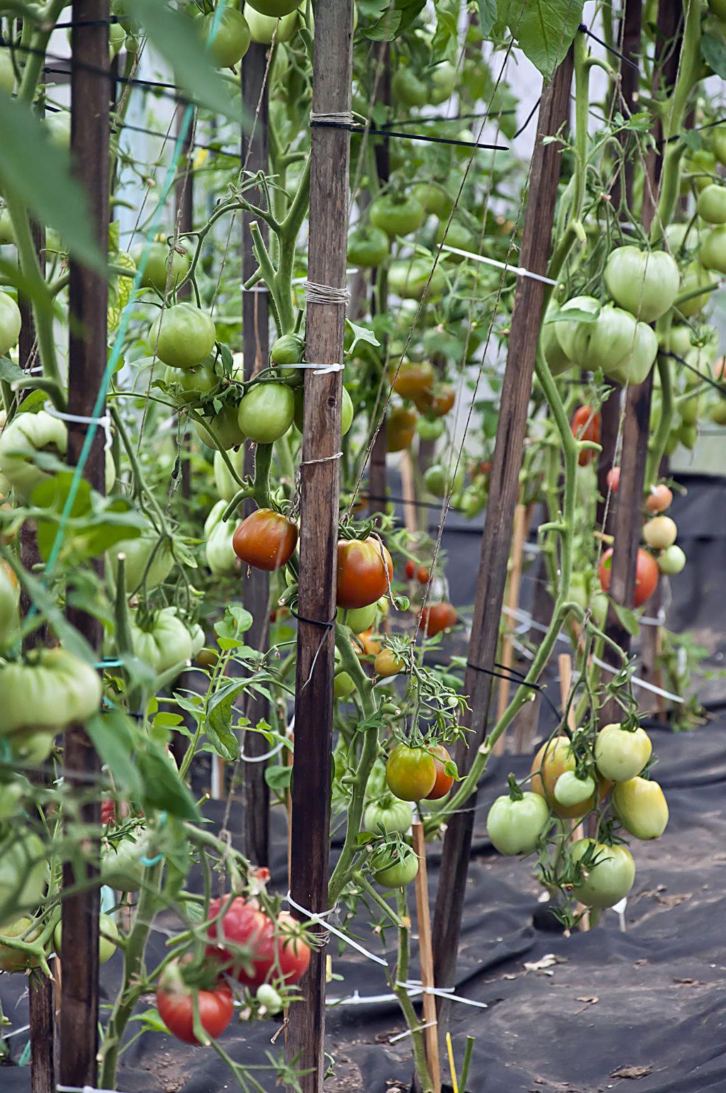 Впер бабе по самые помидоры фото 412-544