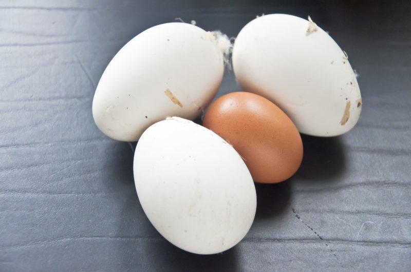 Омлет из гусиных яиц