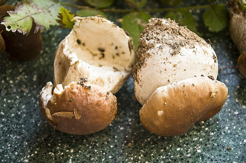 Жюльен из белых грибов